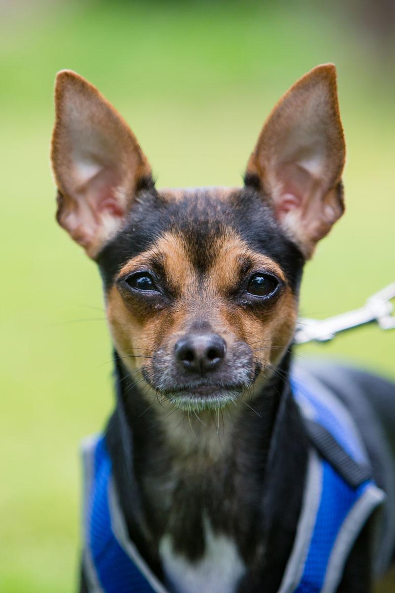 Christine Halsey Photography Pets